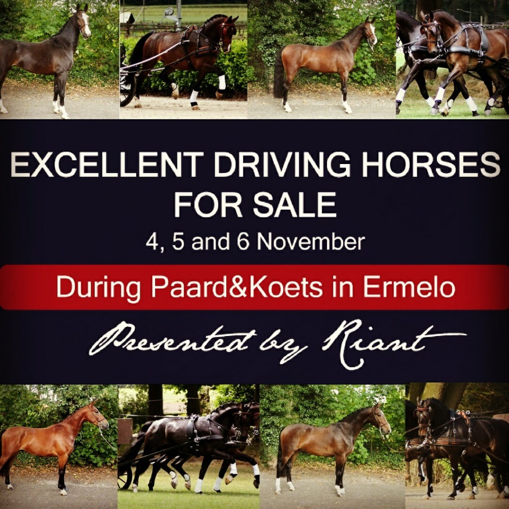 Paard en Koets Horses for sale