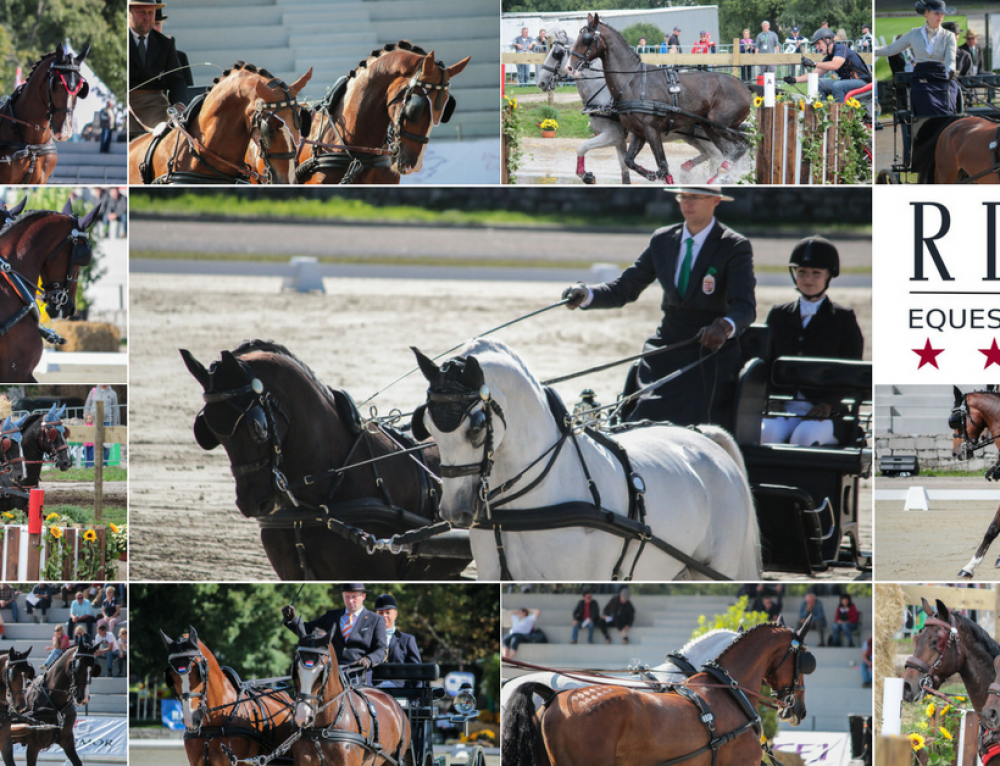 FEI World Driving Championships for Pairs Lipica and our horses