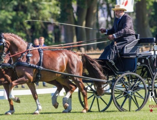 FEI Driving World Championships for Pairs – Drebkau